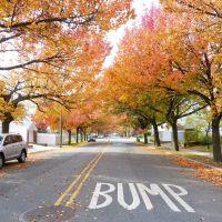 Fall in Glen Oaks, Флорал-Парк