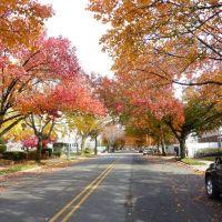 Fall in Glen Oaks 2, Флорал-Парк