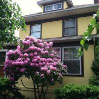 226 Tulip Avenue, Floral Park for sale, Франклин-Сквер