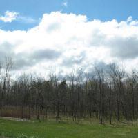 Trees near Maple Drive, Харрис-Хилл