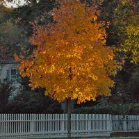Tree in Garden City, Хемпстид