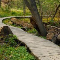 Path in Reinstein Forest Preserve, Чиктовага