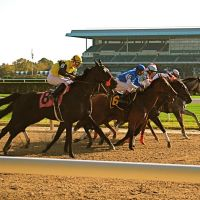 Out of the Gate At Belmont Racetrack, Элмонт