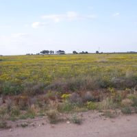 west of Hagerman, NM, Декстер
