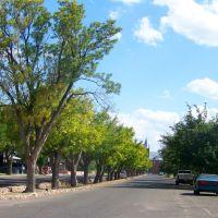 Tree lined street, Деминг