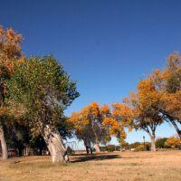 November near Pecos, Карлсбад