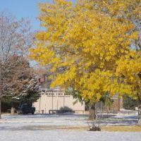 NMSU Agricultural Science Center at Farmington, NM., Киртленд
