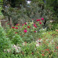Flowers, Кловис