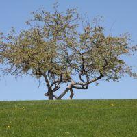 Tree near Ashley Pond, downtown, Лос-Аламос