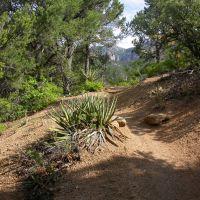 albuquerque, paisaje en cibola national park, Сандиа