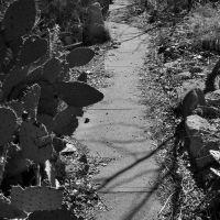 Cactus-Lined Walkway, Силвер-Сити