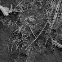 sandhill crane and egg, Татум