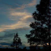Ponderosa fenyők naplementekor..., Тийерас
