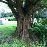 Old Tree in Union Cemetery, Аппер-Арлингтон