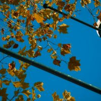 Lampost in Autumn, Бексли