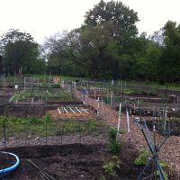 Bexley Community Garden, Бексли
