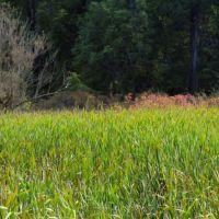 cattail marsh, Брук-Парк