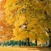 Maple Grove Cemetery - Chesterville Ohio, Виклифф