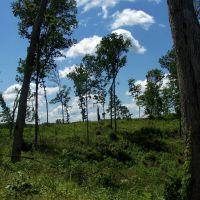 Elk Fork, Ohio, Залески