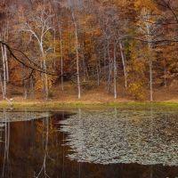 Lake Hope, Залески