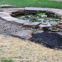 backyard pond, Индепенденс