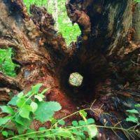 Glen Helen Nature Preserve, Йеллоу-Спрингс