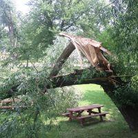Broken Tree, Кантон