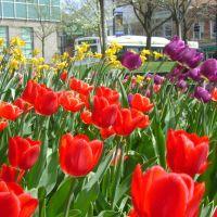 Kent Park Flowers, Кент