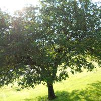 Hackberry Tree, Ланкастер