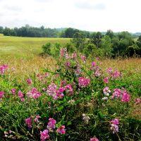 Fertile Field, Лауелл