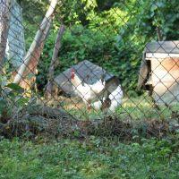 Madisonville Chickens, Маримонт