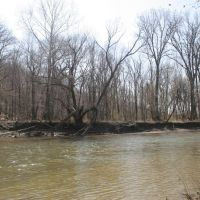Chagrin River- Early Spring, Ментор
