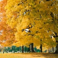 Maple Grove Cemetery - Chesterville Ohio, Мораин