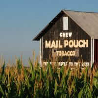 Mail Pouch Barn and Corn, Мэдисон