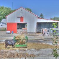 Cows dining by Prairie Grass Trail, Мэдисон