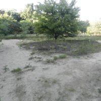 Sand Barrens, Норт-Кингсвилл