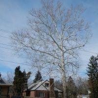 Beautiful Tree, Норт-Колледж-Хилл