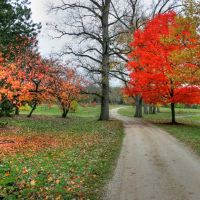 Cox Arboretum, Норт-Риджевилл