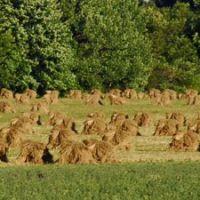 Amish farming, Оверлук