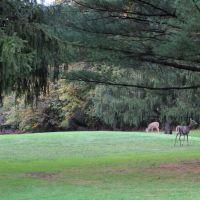 Brandywine Country Club, Cuyahoga Valley National Park, Пенинсула