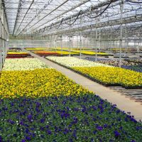 Bobs Market and Greenhouses, Inc. - Driving Range Greenhouse, Померой