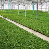 Bobs Market  and Greenhouses - Field House (Rooted Liner Division), Померой