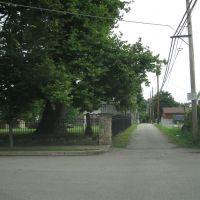 Graveyard Alley, Прокторвилл