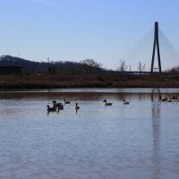 Ducks in a row, Прокторвилл