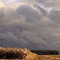 Golden Corn and Dark Sky, Рарден