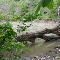 Muddy River, Роки-Ривер
