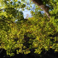 Branch, Роки-Ривер