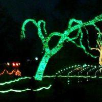 Toledo Zoo - Lights Before Christmas, Россфорд