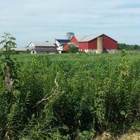 Amish farm., Саванна