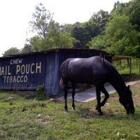 DD the horse, Саут-Пойнт